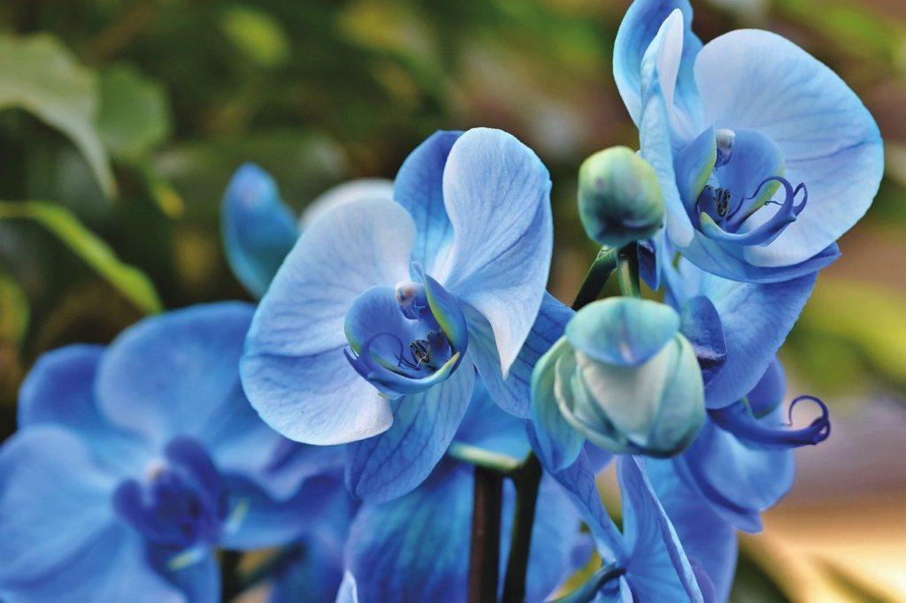 orchids, flowers, petals